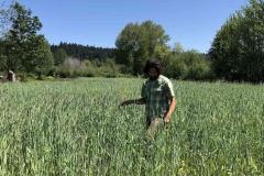 Waist-high winter rye grass (late spring 2020)