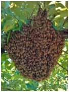 Bee Swarm 3