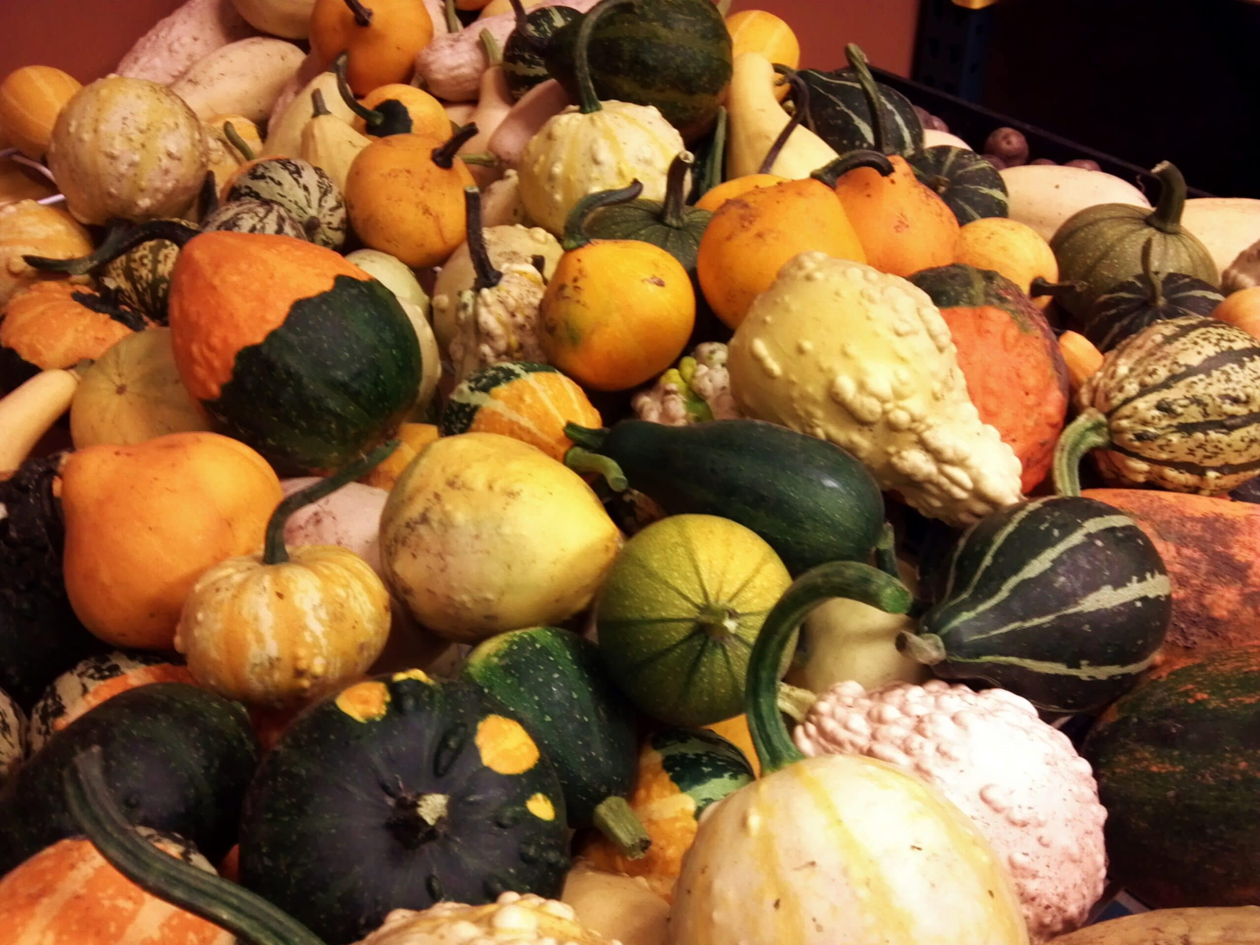 Fall bounty of gourds