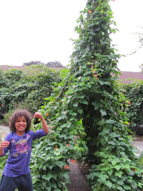 Seattle Tilth Bean Tepee