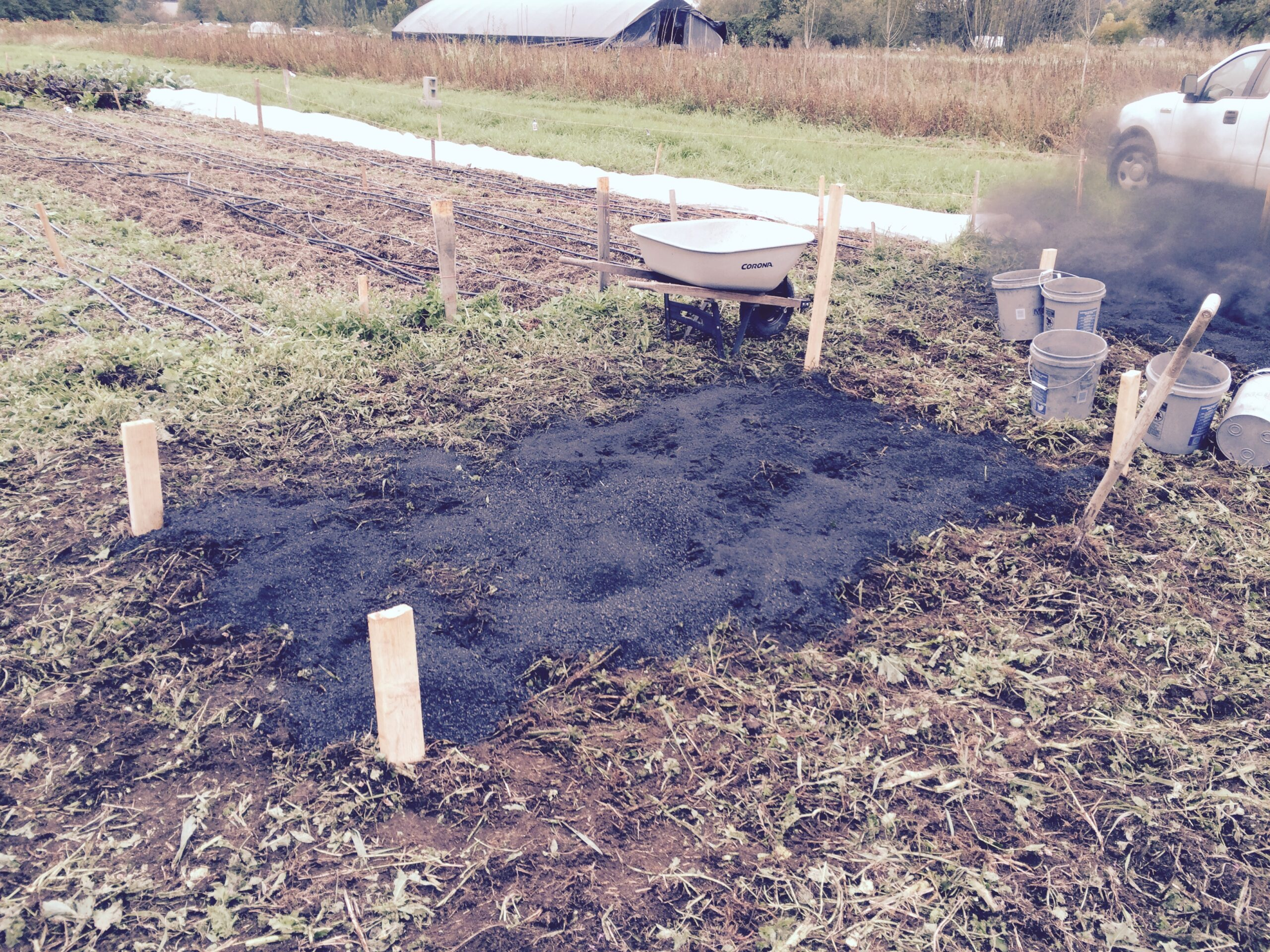 Test plot with biochar