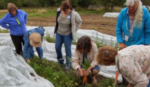 Woodinville, WA. Join an experienced field guide for a Farm Walk at 21 Acres.