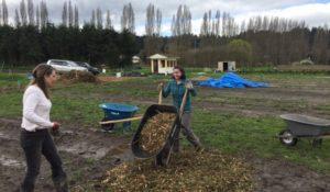 Volunteering at SAgE Farm