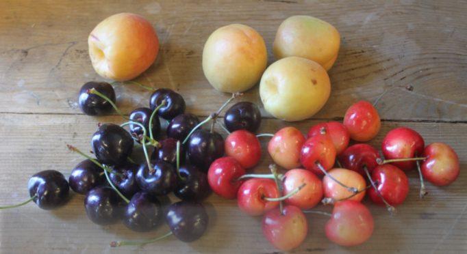 Stone fruit blog