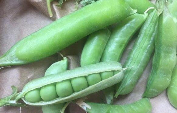 Alvarez Farm peas