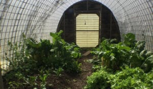 Hoop house at Hawthorn Farm holds greens all winter long.