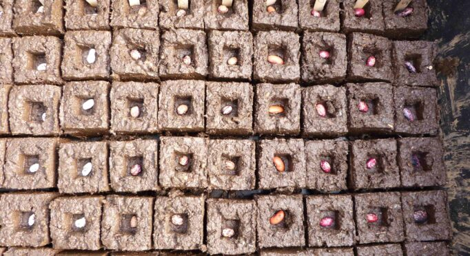 Seed blocks are a great sustainable way to start seeds by hand.