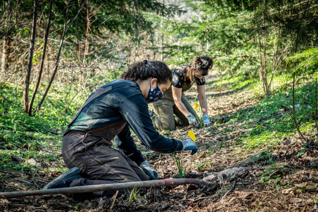 Rhianne Janovich and Jess Chandler restore the 21 Acres wetlands with native plantings.