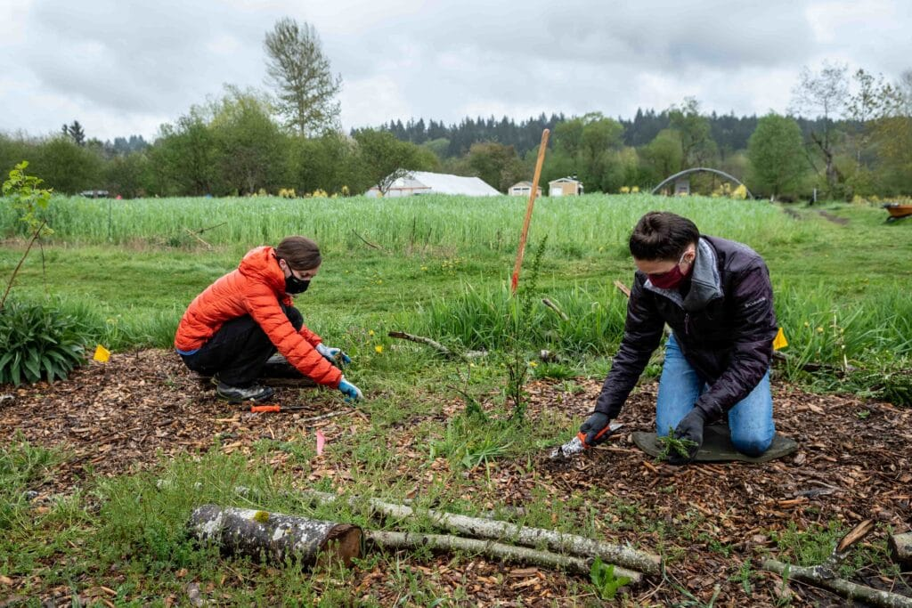 Volunteers plant a new hedgerow at the 21 Acres farm.
