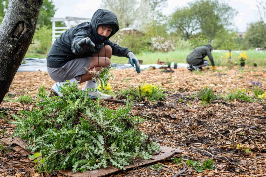 Volunteers weed the pollinator garden at the 21 Acres farm.