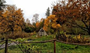 Autumn garden at Hawthorn Farm holds secrets for spring success next year.