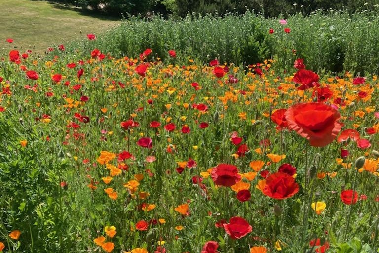 Wildflowers on the 21 Acres green campus help support biodiversity.