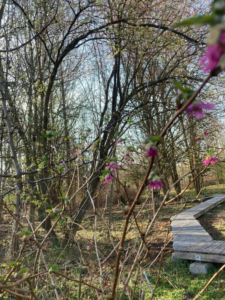 The 21 Acres wetlands provide habitat for amphibians and other important indicator species.