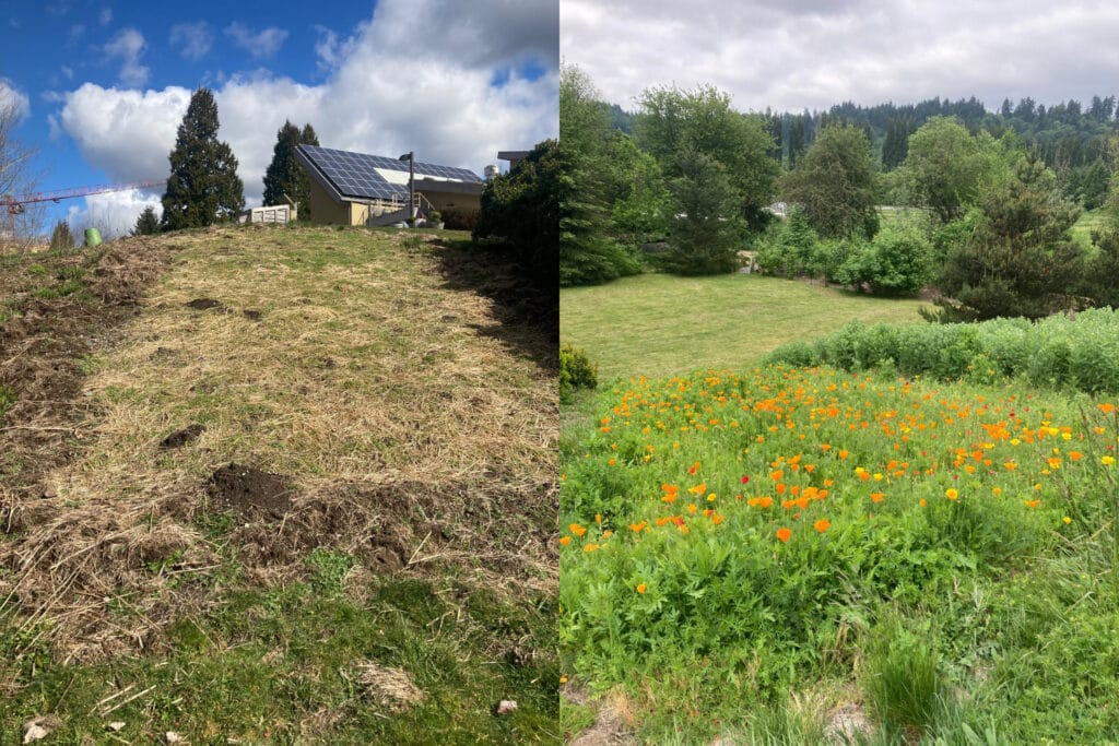A before and after shot of the wildflower berm on the 21 Acres campus.