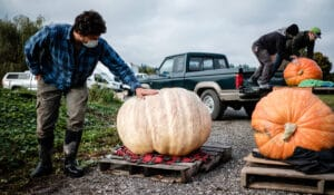 Andrew of Viva Farms gently admiring his giant pumpkin from 2020